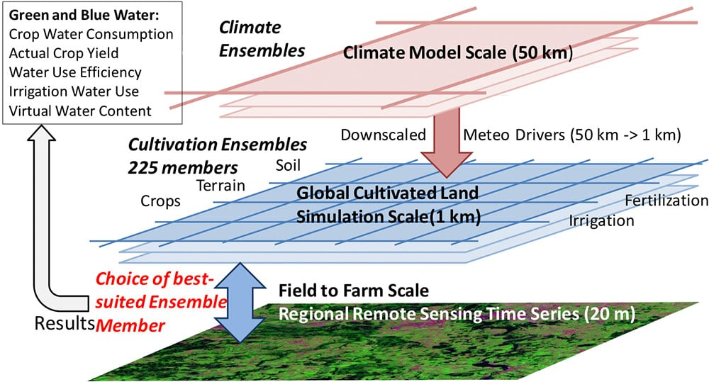 Fig.2: The scaling and simulation concept of target 1. Meteorological inputs dynamically downscaled from global reanalysis data drive a 225 member ensemble of hourly simulations representing the major crops and cultivation practices (fertilization, irrigation, cropping intensity) for each 1km pixel on the global cropland plus 1 member for each non-cropland. The simulated ensemble of growth curves is compared with high resolution (20m) COPERNICUS remote sensing data streams to determine actual water use efficiency, actual yield and virtual water content of crops for ~150 global test sites.